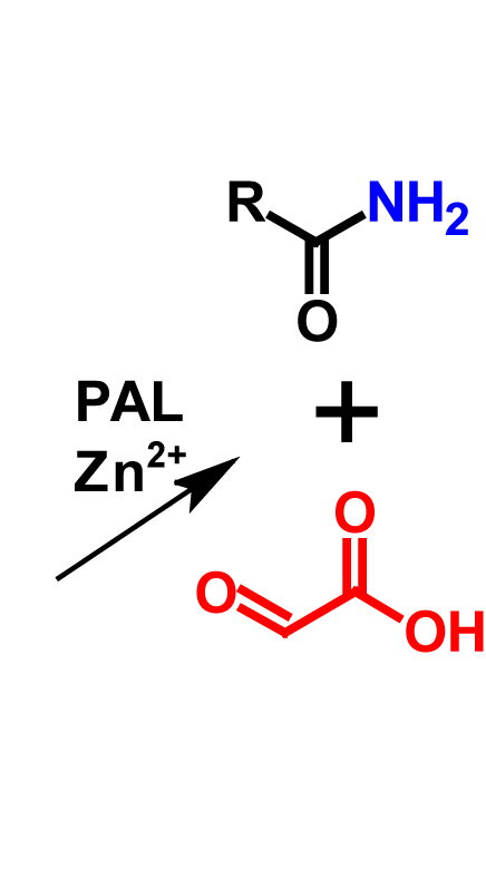 Amidation (in vivo) products
