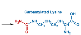 Carbamylation products